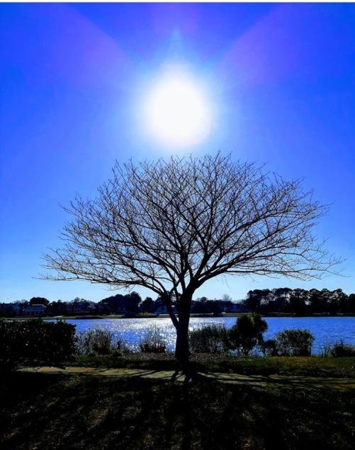 Tree of Life Sun Mary